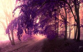冠, 树, 叶子, 道路, 紫色, 森林