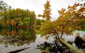 天空, 秋, 滨, 河, 树