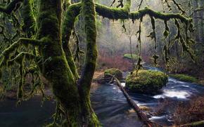 trees, stones, moss