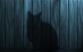 Schatten, Silhouette, cat, Texture, Wand, Aufsichtsrat, Hölzern