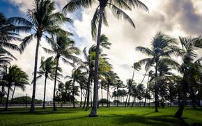 сша, пальма, флорида, трава, майами, пальмы, парк, арт, облако, небо, деко