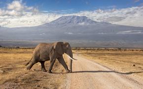 Кения, потухший, дорога, горы, вулкан, слон