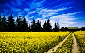 поле, дорога, закат, деревья, пейзаж