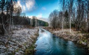 река, лес, деревья, пейзаж