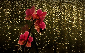 блики, красная, орхидея, ветка, цветок