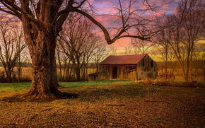 morning, abandoned, home, tree, trees