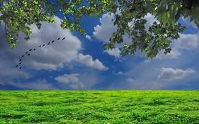 поле, небо, ветки, стая птиц, пейзаж