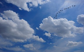 небо, облака, стая птиц, природа