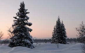 冬天, 雪, 树, 景观