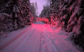 冬, 森, 木, 道路