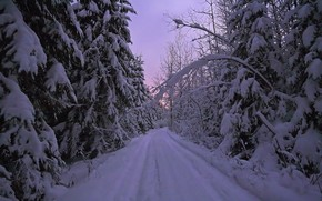 冬, 森, 木, 道路, 自然