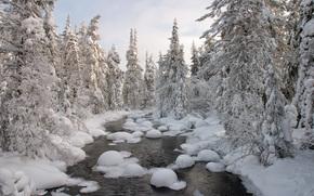 река, зима, деревья, пейзаж