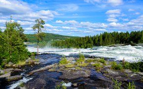 川, 森, 木, もちろん, 空, 風景