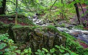 foresta, fiume, Rocce, ponte, natura