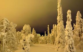 invierno, bosque, árboles, paisaje