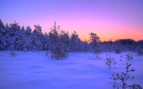 закат, зима, лес, деревья, пейзаж