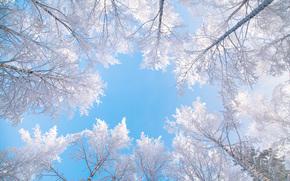 cielo, árboles, superior