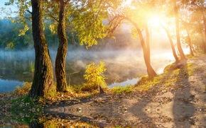 autunno, lago, nebbia, sole, alberi
