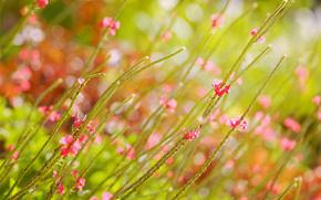 Flowers, pink, field, summer, glare, blur
