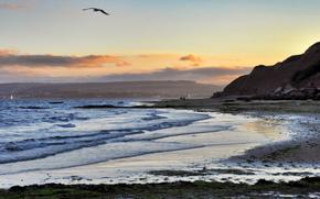 залив, пляж, море, птица, вечер