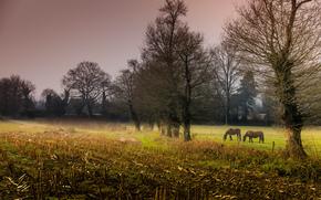 деревья, вечер, кони, поле