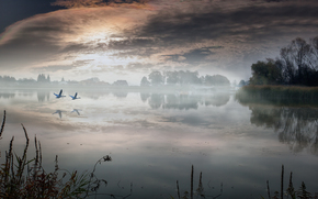 lake, Swans, landscape, morning, village