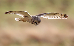 bird, nature, birds, flight, owl, SPAN, Owl, wings