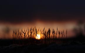 moss, sun, DAWN, nature, morning, grass, light