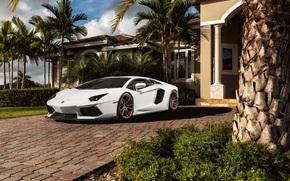 особняк, Lamborghini, белый, ламборгини, авентадор, пальмы, перед, ламборджини