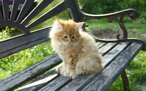 лавочка, маленький котик, рыжик