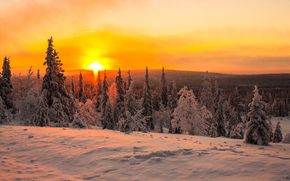 冬天, 森林, 太阳, 黎明, 荒原, 雪