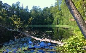 озеро, лес, деревья, природа