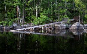湖, 森林, 树, 石头, 性质