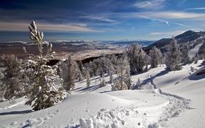 冬天, 山, 树, 景观