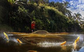 pescador, FISH, salpico, rede, jogar