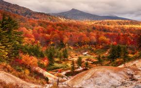 буковый, осень, горы Сираками, лес, Япония, префектура Акита