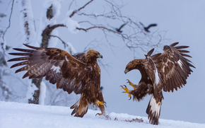 winter, snow, mining, birds, Eagles