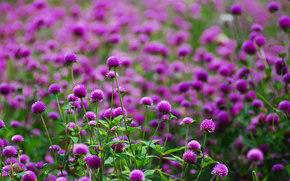 размытость, поляна, цветы, Фиолетовые