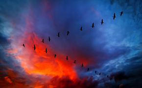 clouds, flight, sky, glow, Wedge, CLOUDS, birds, sunset