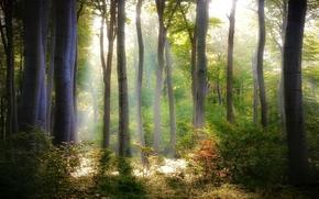 деревья, лес, свет, зеленые, листва, кусты, природа, листья
