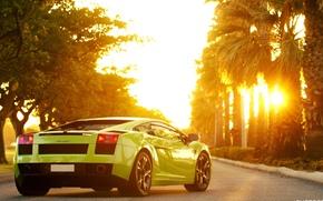 Солнце, Пальмы, Lamborghini, Машина, Ламборгини, Галлардо