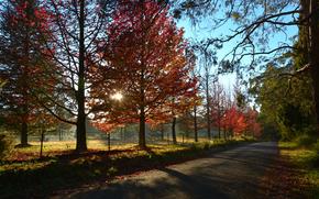 закат, дорога, деревья, небо, осень, лучи, солнце