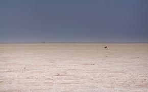 capriolo, deserto, minimalismo