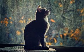 кошка, профиль, вечер, свет, окно