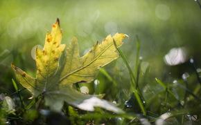 роса, капли, блики, лист, трава