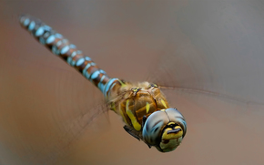 wings, insect, background, dragonfly, Macro
