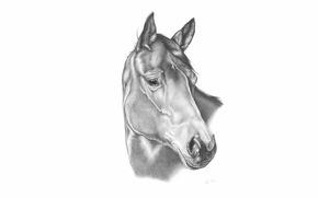 конь, карандаш, рисунок, лошадь