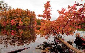 cielo, autunno, costa, fiume, alberi