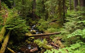 лес, деревья, речка, ручей, природа