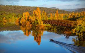 automne, lac, arbres, paysage